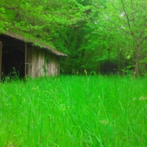 cabane dans prairie